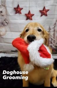 dogpic0