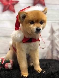 dogpic14