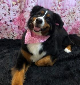 dogpic63